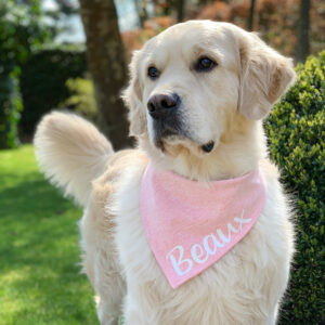 bandana, hond, bedrukt, naam, hondenbandana, gepersonaliseerde bandana